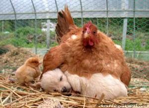 dog chick