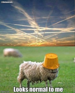 sheep and chemtrails