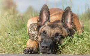 dog and owl 2